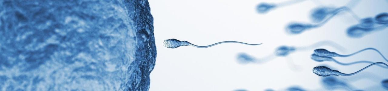 Диета DASH способствует улучшению качества спермы