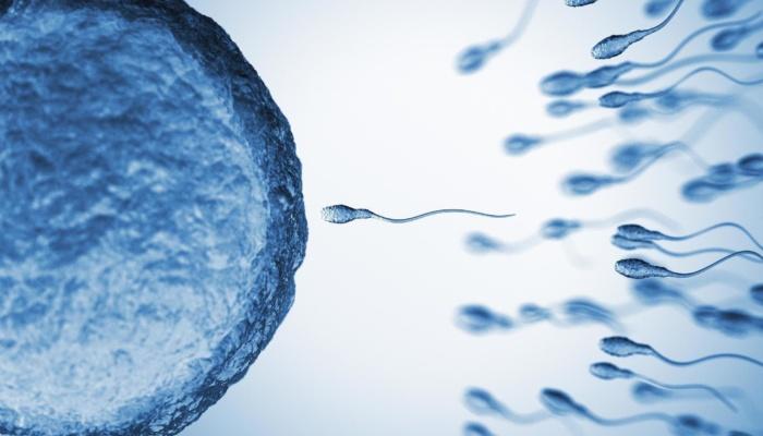 """Современные способы борьбы с """"бедным ответом"""" яичников: андрогенный прайминг, применение гормона роста."""
