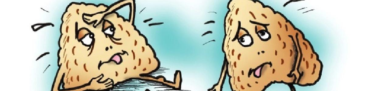 Низкобелковая диета ухудшает функцию надпочечников