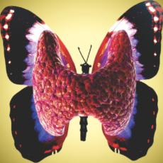 Щитовидная железа, её роль в организме. Как понять, что существуют проблемы в работе щитовидной железы и что с этим делать. Просто о сложном.