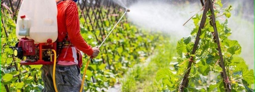 Пестициды могут приводить к гипотиреозу