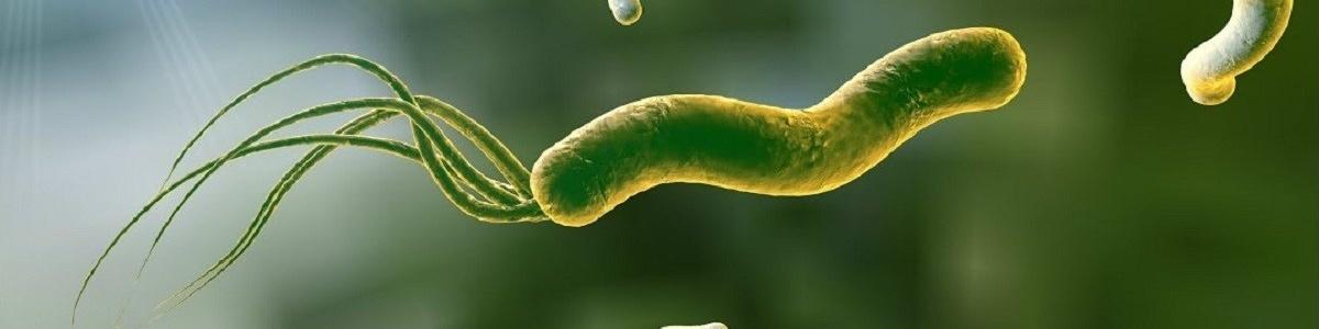 H.pylori может приводить к гипотиреозу