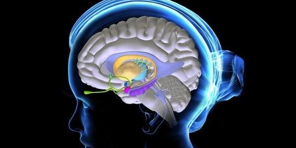 Разные лекарственные формы эстрогенов после менопаузы по-разному влияют на мозг