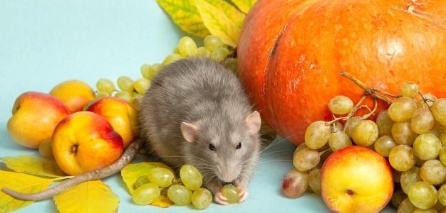 Низкий уровень половых гормонов приводит к диабету у мышей