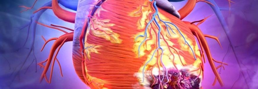 Прогестерон способствует восстановлению миокарда