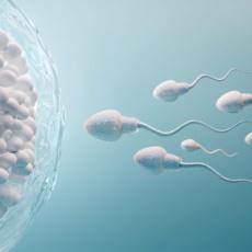 «Не хочу сперму донора!». Современные способы коррекции азооспермии